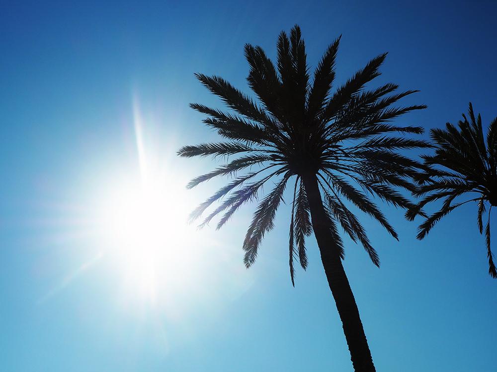 palma de mallorca guys Få tips til din ferie i palma de mallorca hos mallorcadk bestil billige rejser med fly og hotel til mallorca i dag  men er nu flyttet til palma.